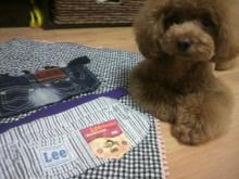 愛犬鈴ちゃん~トイプードル☆ライフスタイル~-2012070421220000.jpg
