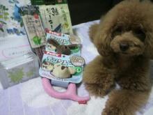 愛犬鈴ちゃん~トイプードル☆ライフスタイル~-2012070513540000.jpg