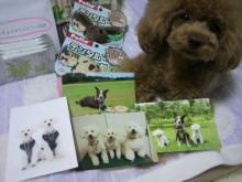 愛犬鈴ちゃん~トイプードル☆ライフスタイル~-2012070513550000.jpg
