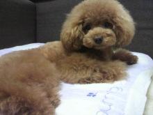 愛犬鈴ちゃん~トイプードル☆ライフスタイル~-2012070514070001.jpg