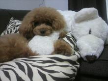 愛犬鈴ちゃん~トイプードル☆ライフスタイル~-2012070515080000.jpg