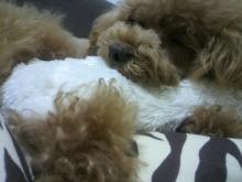 愛犬鈴ちゃん~トイプードル☆ライフスタイル~-2012070515090002.jpg