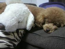 愛犬鈴ちゃん~トイプードル☆ライフスタイル~-2012070515170001.jpg