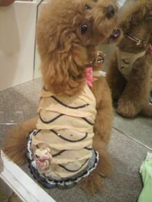愛犬鈴ちゃん~トイプードル☆ライフスタイル~-2012070615240000.jpg