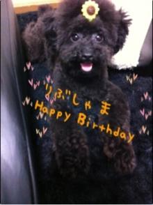 愛犬鈴ちゃん~トイプードル☆ライフスタイル~-image01.jpg
