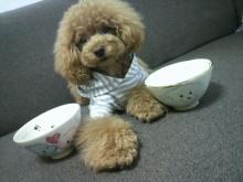 愛犬鈴ちゃん~トイプードル☆ライフスタイル~-2012070909410000.jpg