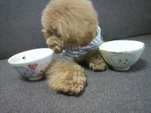愛犬鈴ちゃん~トイプードル☆ライフスタイル~-2012070909410002.jpg