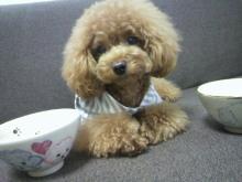 愛犬鈴ちゃん~トイプードル☆ライフスタイル~-2012070909420000.jpg