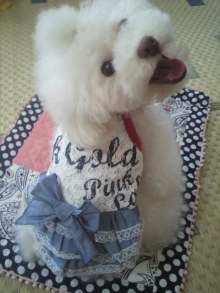 愛犬鈴ちゃん~トイプードル☆ライフスタイル~-2012071510140000.jpg