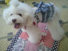 愛犬鈴ちゃん~トイプードル☆ライフスタイル~-2012071510150000.jpg