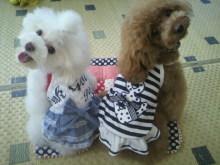 愛犬鈴ちゃん~トイプードル☆ライフスタイル~-2012071510150001.jpg