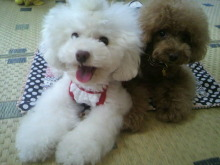 愛犬鈴ちゃん~トイプードル☆ライフスタイル~-2012071510160000.jpg