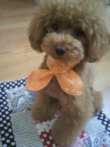 愛犬鈴ちゃん~トイプードル☆ライフスタイル~-2012070914380000.jpg