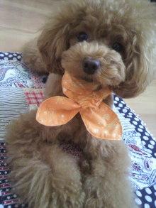 愛犬鈴ちゃん~トイプードル☆ライフスタイル~-2012070914400001.jpg