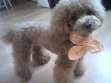 愛犬鈴ちゃん~トイプードル☆ライフスタイル~-2012070914420000.jpg