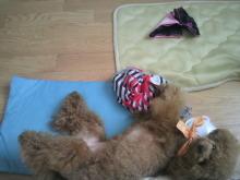 愛犬鈴ちゃん~トイプードル☆ライフスタイル~-2012070915430000.jpg