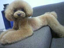 愛犬鈴ちゃん~トイプードル☆ライフスタイル~-2012070216530001.jpg
