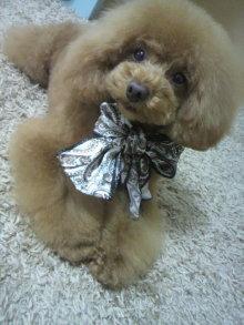 愛犬鈴ちゃん~トイプードル☆ライフスタイル~-2012051315560000.jpg
