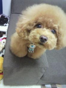 愛犬鈴ちゃん~トイプードル☆ライフスタイル~-2012060213140000.jpg