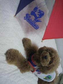 愛犬鈴ちゃん~トイプードル☆ライフスタイル~-2012061019510000.jpg