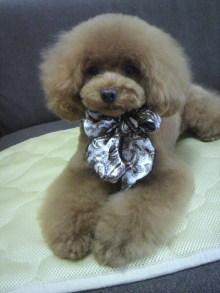 愛犬鈴ちゃん~トイプードル☆ライフスタイル~-2012070216360000.jpg