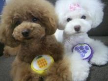 愛犬鈴ちゃん~トイプードル☆ライフスタイル~-2012062413160000.jpg