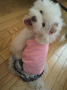 愛犬鈴ちゃん~トイプードル☆ライフスタイル~-2012071513570000.jpg
