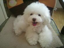 愛犬鈴ちゃん~トイプードル☆ライフスタイル~-2012071513530002.jpg