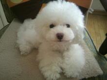 愛犬鈴ちゃん~トイプードル☆ライフスタイル~-2012071513530003.jpg