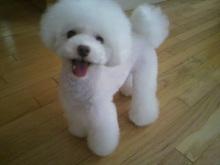 愛犬鈴ちゃん~トイプードル☆ライフスタイル~-2012071516270000.jpg