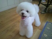 愛犬鈴ちゃん~トイプードル☆ライフスタイル~-2012071516270001.jpg