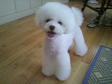 愛犬鈴ちゃん~トイプードル☆ライフスタイル~-2012071516270002.jpg