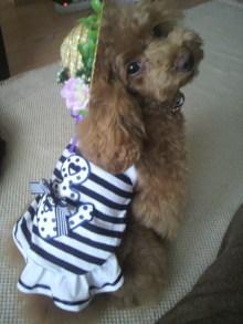 愛犬鈴ちゃん~トイプードル☆ライフスタイル~-2012071507330000.jpg