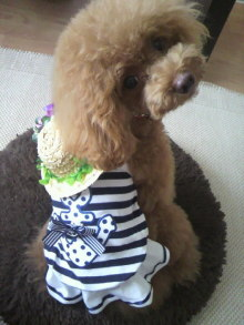 愛犬鈴ちゃん~トイプードル☆ライフスタイル~-2012071507370000.jpg