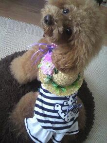 愛犬鈴ちゃん~トイプードル☆ライフスタイル~-2012071507380000.jpg