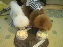 愛犬鈴ちゃん~トイプードル☆ライフスタイル~-2012071518070001.jpg