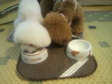 愛犬鈴ちゃん~トイプードル☆ライフスタイル~-2012071518090001.jpg