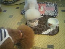 愛犬鈴ちゃん~トイプードル☆ライフスタイル~-2012071518100001.jpg
