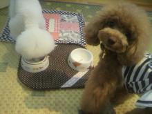 愛犬鈴ちゃん~トイプードル☆ライフスタイル~-2012071518100002.jpg