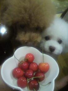 愛犬鈴ちゃん~トイプードル☆ライフスタイル~-2012071519000000.jpg
