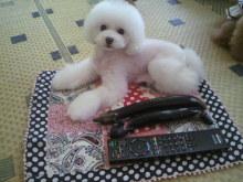 愛犬鈴ちゃん~トイプードル☆ライフスタイル~-2012071517540001.jpg