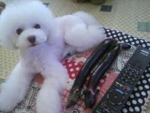 愛犬鈴ちゃん~トイプードル☆ライフスタイル~-2012071517540002.jpg