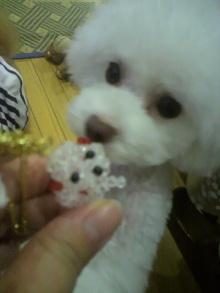 愛犬鈴ちゃん~トイプードル☆ライフスタイル~-2012071519050000.jpg