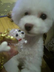 愛犬鈴ちゃん~トイプードル☆ライフスタイル~-2012071519050001.jpg