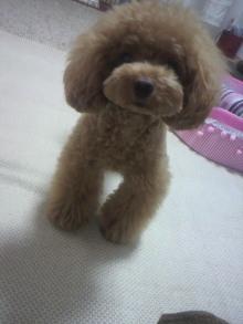 愛犬鈴ちゃん~トイプードル☆ライフスタイル~-2012071611360002.jpg