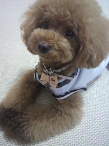 愛犬鈴ちゃん~トイプードル☆ライフスタイル~-2012071909480002.jpg