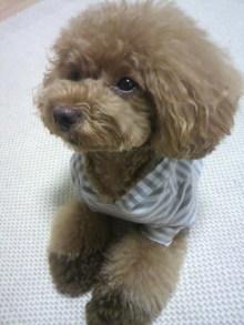 愛犬鈴ちゃん~トイプードル☆ライフスタイル~-2012072019310000.jpg
