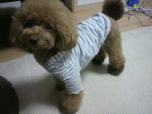 愛犬鈴ちゃん~トイプードル☆ライフスタイル~-2012072019290001.jpg