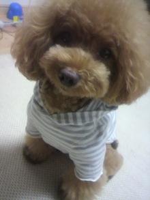 愛犬鈴ちゃん~トイプードル☆ライフスタイル~-2012072019300000.jpg