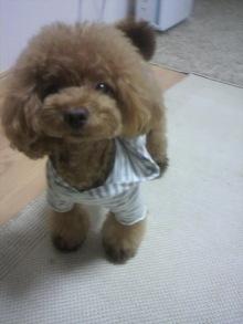 愛犬鈴ちゃん~トイプードル☆ライフスタイル~-2012072019290000.jpg